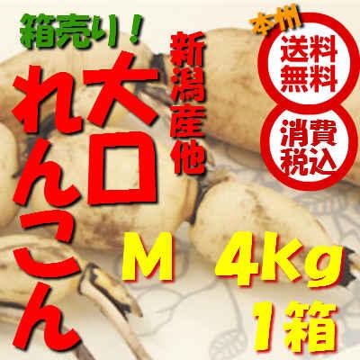 野菜【送料無料(本州) 箱売 消費税込】新潟県産 れんこん Mサイズ 約4kg1箱(れんこん れんこん )上越フルーツ