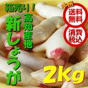 【本州送料無料 税込】高知県産他 新しょうが 2kg(しんしょうが シンショウガ ショウガ しょうが 新生姜)上越フルーツ