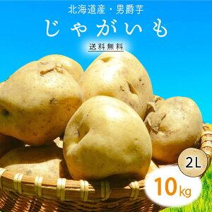 【送料無料】北海道産 男爵 じゃがいも 2L 10kg 1箱 | じゃが芋 ジャガイモ ポテト 男爵芋 箱 まとめ買い 野菜 根菜 業務用 上越フルーツ