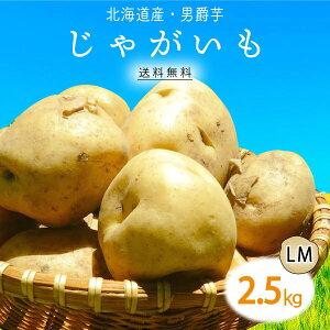 【max500円クーポン|スーパーセール】【送料無料】北海道産 男爵 じゃがいも LM 2.5kg 1箱 | じゃが芋 ジャガイモ 男爵芋 ポテト 箱 まとめ買い 野菜 根菜 業務用 上越フルーツ