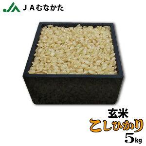【送料無料】玄米/注文を受けてから精米(発送日に精米します)JAむなかた産「こしひかり」5kg/JAむなかた直売所直送/お米/ごはん