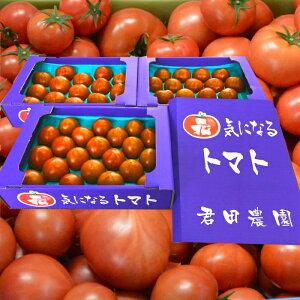 都内トマト専門店が認めた本格派フルーツトマト食べた事ある人しか分からないこの旨さ。糖度9度以上:レジェンド「君ちゃんトマト」栃木県佐野市産詰合せセット贈答用/贅沢品/配送無