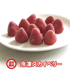 送料無料/日本一の生産量を誇る栃木県のイチゴ<冷凍 スカイベリー1kg>ちおとめと一味違う♪おやつにピッタリかぶりつき、冷た〜いスムージーに是非!栃木県佐野市産/冷凍/イチゴ