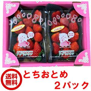 とちおとめ 2パックセット 送料無料 栃木県産 さのまるオリジナル箱セット