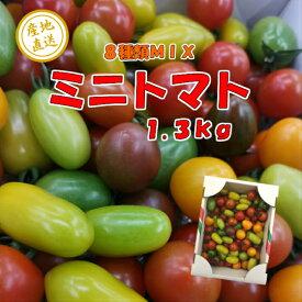 カラフルトマト 彩り豊かなミニトマト1.3kg 送料無料