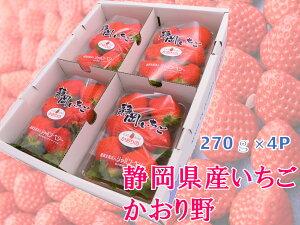 ポイント15倍 送料無料 イチゴ かおり野 静岡県産 4パック 産地直送 国産 1キロ 苺 いちご 贈答用 果物 フルーツ