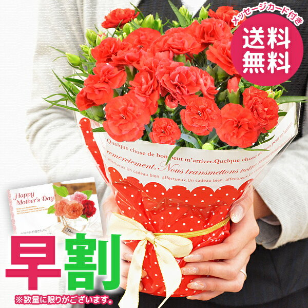母の日 プレゼント ギフト 早割 カーネーション 鉢植え 4号鉢 花 鉢花 花鉢 母の日ギフト おしゃれ 限定 送料無料