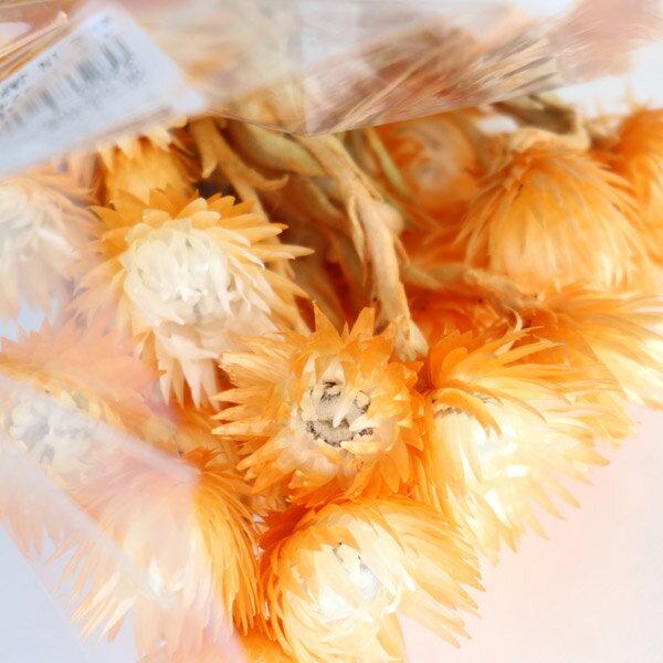 【希少!期間限定販売 ドライフラワー】大地農園 ミニシルバーデージー ツートンオレンジ 1袋(25g) 32001-350 ハーバリウム 花材 キット プリザーブドフラワー シルバーデイジー