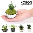 お手入れ不要 小さなプリザーブド盆栽 KOBON ミニ盆栽 bonsai ボンサイ 苔 苔玉 コケ こぼん 小盆栽 ギフト プレゼン…