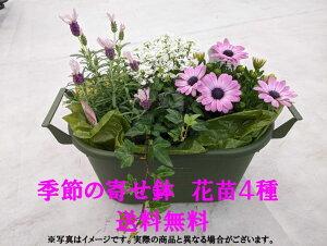 【仙台ローズガーデン】季節の寄せ鉢7花苗4種類