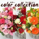 ジャスト5000円!お好きな色合いをお選び下さい♪お花屋さんにおまかせ!お祝い・お誕生日・結婚お祝・出産お祝・開店お祝・結婚記念日…