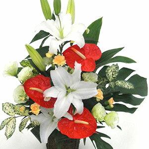 【南国の風を感じるような華やかなアレンジ】お祝い・お誕生日・結婚お祝・出産お祝・移転祝い・開店祝い・開業祝い・結婚記念日・お礼・発表会・季節のお花・成人式・バレンタイン・ホワイトデー・退職祝い・入学祝いなど。