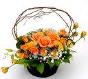 【オレンジ系カラー・ローズ/バラ・アレンジ】お祝い・お誕生日・結婚祝・出産祝・開店祝・結婚記念日・父の日・お中元・お礼・発表会…