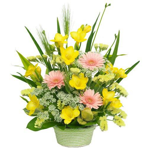 【春のお花・アレンジ・フリージア】お祝い・お誕生日・結婚お祝・出産お祝・開店祝・結婚記念日・お礼・発表会・季節のお花・お返しプレゼント・成人式・バレンタイン・ホワイトデー・退職祝い・入学祝いなど。