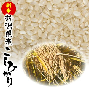 白根観光きのこ園の『新潟産新米こしひかり(玄米)』30kg【クール冷蔵便】
