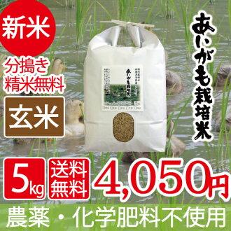 也對新手無農藥無化肥糙米5kg aigamo美國29年産西日本兵庫県但馬産食味特A米健康食品最合適的鴨子農業方法糙米開羅最合適的2017年生產鴨子米
