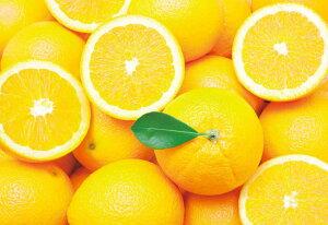 EPO-79-366 Mr.Puzzleからの挑戦状 バレンシアオレンジからの挑戦状 1053ピース ジグソーパズル エポック社 【あす楽】 パズル Puzzle ギフト 誕生日 プレゼント