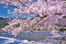 YAM-10-1388 風景 嵐山染める満開桜(京都)1000ピース ジグソーパズル やのまん パズル Puzzle ギフト 誕生日 プレゼント
