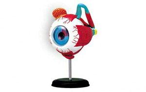 立体パズル 4D VISION 人体解剖 No.02 眼球解剖モデル