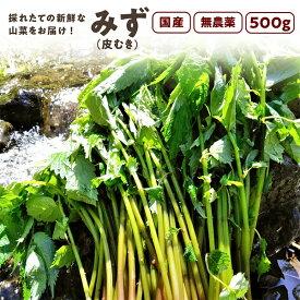 みず(皮むき)500g 秋田県産 みず 山菜 さんさい とれたて【6月中旬頃出荷予定】