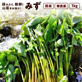 みず 1,000g 秋田県産 みず 山菜 さんさい 1kg とれたて【6月中旬頃出荷予定】