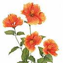 【造花 ・夏の造花 ・ハイビスカス】トロピカルハイビスカス・オレンジ