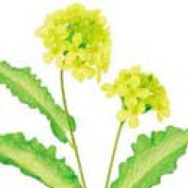 【造花・春の造花・菜の花】菜の花 x 2