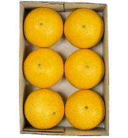 【食品サンプル・果物・野菜・フルーツ・ベジタブル】フロリダグレープフルーツ(6ヶ/パック)