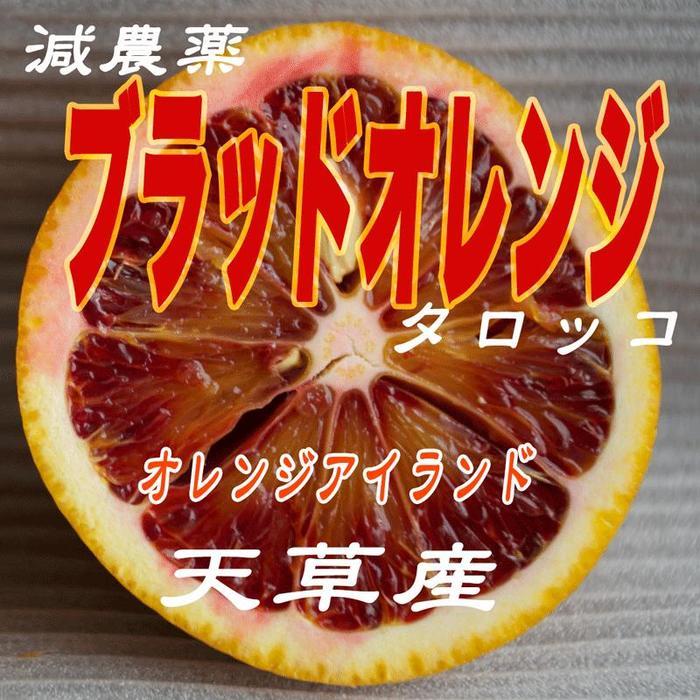 ブラッドオレンジ【訳あり】減農薬栽培 天草ブラッドオレンジ5kg入り天草オーガニック