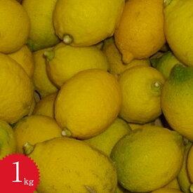 レモン【訳あり】減農薬有機栽培無添加の天草レモン1kg入り天草オーガニックフルーツ酢・レモン酢に大活躍