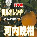 長島オレンヂの10kg箱(7〜9kg)入り「あまくさ晩柑」(河内晩柑)