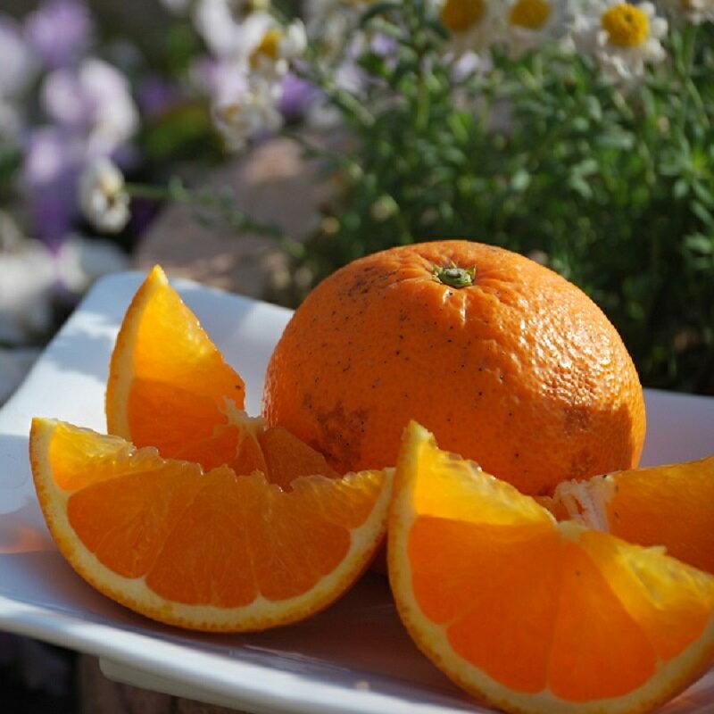 清見タンゴール(清見オレンジ)【訳あり】5kg入り全クール便配送