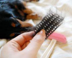 ブラシに付いた毛もパッと取れる!