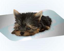 ひんや〜りクールボード(熱中症対策用冷却マット/クールマット/ひんやりプレート)犬猫兼用