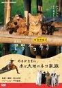 【送料無料】劇場版 岩合光昭の世界ネコ歩き あるがままに、水と大地のネコ家族/ドキュメンタリー映画[DVD]【返品種別…