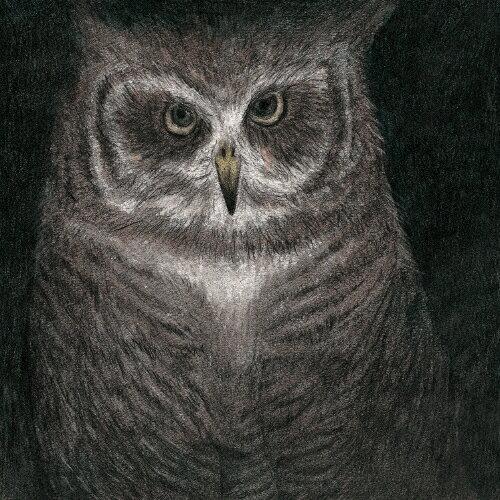 [限定盤]フクロウの声が聞こえる/小沢健二とSEKAI NO OWARI[CD][紙ジャケット]【返品種別A】