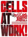 【送料無料】[限定版]はたらく細胞 4(完全生産限定版)/アニメーション[DVD]【返品種別A】