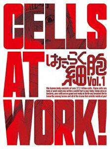 はたらく細胞1(完全生産限定版)|アニメーション|ANZX-14701/2