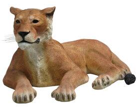 置物動物インテリア置物インテリア 動物ライオネス・ポーズ / Lioness Lying Down fr080115