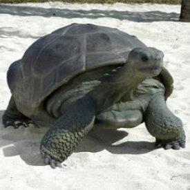 置物インテリア カメガラパゴスの遺産 / Galapagos Tortoise fr080124