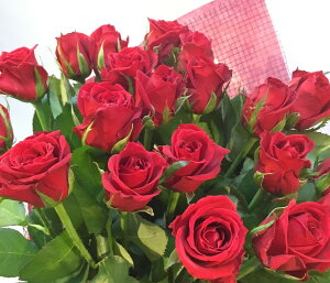 お誕生日 記念日 バレンタインデー お祝い ばらの花束 国産 バラ 赤 豪華ギフトラッピング付き 赤バラ花束【赤ばら20本の花束】