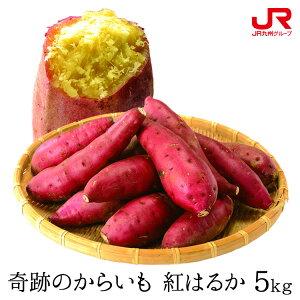 九州 ギフト 2021 ふるさと駅 奇跡のからいも 紅はるか(5kg) S〜2Lサイズ 熊本県産 さつまいも I51Z64 常温