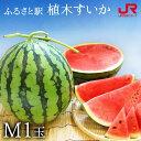 ふるさと駅 熊本産植木すいか(M 1玉) 熊本 スイカ 西瓜 熊本県産 果物 常温