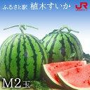 ふるさと駅 熊本産植木すいか(M 2玉) 熊本 スイカ 西瓜 熊本県産 果物 常温