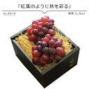 紫苑 しえん 2房 送料無料 岡山ぶどう 冬に食べられるぶどう 10月下旬