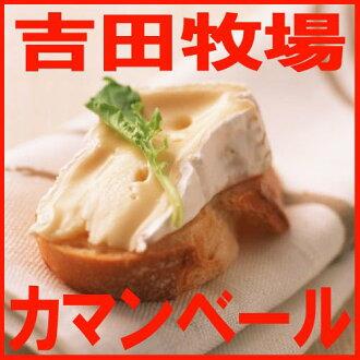 冈山县吉田牧场的自制的奶酪(卡门贝干酪)超过150g^
