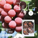 岡山産【特選】赤ぶどうゴルビー2kg前後(3〜4房)(9月上旬〜)ぶどう^送料無料17-27-08 ランキングお取り寄せ