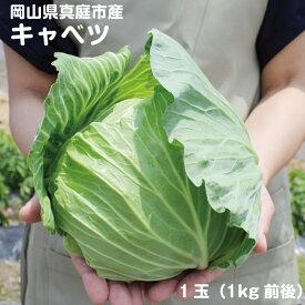 岡山県真庭産キャベツ 1玉 1kg前後 単品野菜 西日本 お歳暮