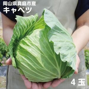 岡山県真庭産キャベツ 1kg前後×4玉 単品野菜 西日本