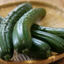 パリポリ新鮮きゅうり 3本 岡山県真庭産 単品野菜 きゅうりのまるかじり 浅漬け